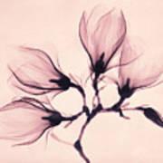 Whisper Magnolia Art Print