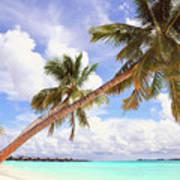 Whispering Palms. Maldives Art Print