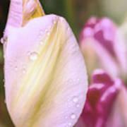 Whispering Tulips Art Print