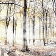 Whispering Woodland In Autumn Fall Art Print