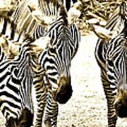 Whispering Zebras Art Print