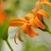Whispers Of Orange Symphony Art Print