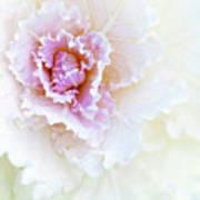White And Pink Ornamental Kale Art Print