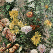 White And Yellow Chrysanthemums In The Garden At Petit Gennevilliers Art Print