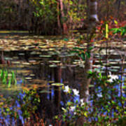 White Azaleas In The Swamp Art Print