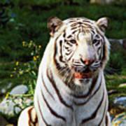 White Bengal Tiger  Art Print by Garry Gay