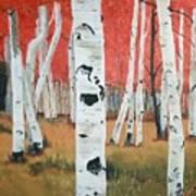 White Birches Art Print