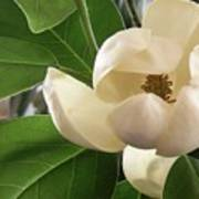 White Bouquet Art Print