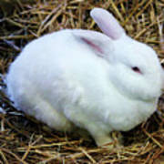 White Bunny Art Print