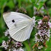 White Butterfly At The Good Earth Market Art Print