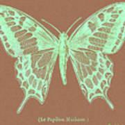 White Butterfly Swallow Tail Le Papillon Machaon Art Print