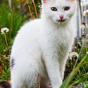 White Cat Sitting Art Print