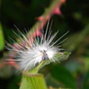 White Caterpillar  Art Print