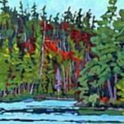 White Cedar Shore Art Print