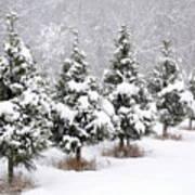 White Christmas At The Christmas Tree Farm Art Print