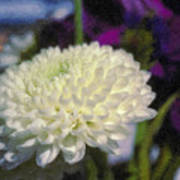 White Chrysanthemum Flower Art Print