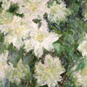 White Clematis Art Print by Claude Monet
