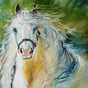 White Cloud The Andalusian Stallion Art Print