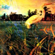 White Cranes Art Print