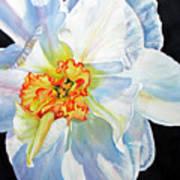 White-daffodil Art Print