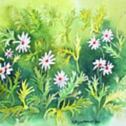 White Daisys Art Print
