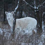White Deer In Winter Art Print