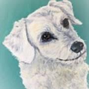 White Dog Art Print