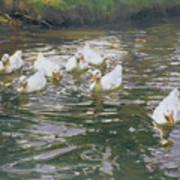 White Ducks On Water Art Print