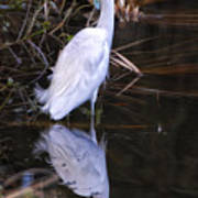 White Egret And Reflection Art Print