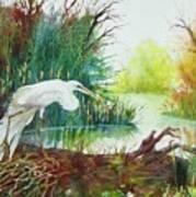 White Egret Swamp Art Print