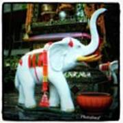White Elephant. Meaning A Big Expensive Art Print