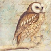 White Faced Owl Art Print