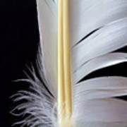 White Feather Art Print by Bob Orsillo