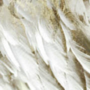 White Feathers With Gold Art Print