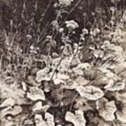White Flowers 1877 12 3h9 Ivan Ivanovich Shishkin Art Print