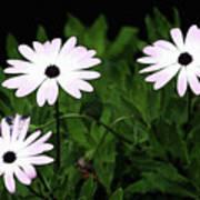 White Flowers In The Garden Art Print