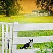 White Gate Cat Art Print