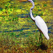 White Heron 1 Art Print