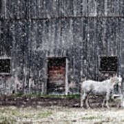 White Horse In A Snowstorm  Art Print