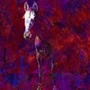 White Horse White Horse  Art Print
