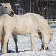 White Horses In The Snow  Art Print