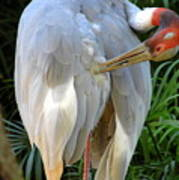 White Ibis At The Zoo Art Print