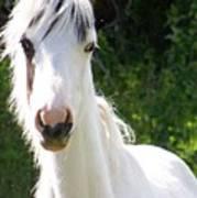 White Indian Pony Art Print