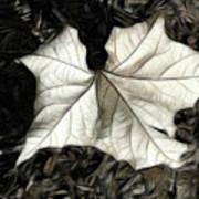 White Leaf On The Ground Art Print