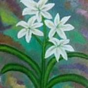 White Lilies Art Print
