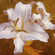 White Lilies. Time To Be Romantic Art Print