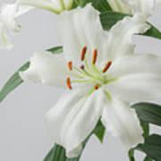 White Lily 2 Art Print