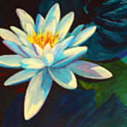 White Lily IIi Art Print by Marion Rose