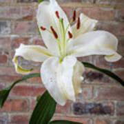 White Lily Portrait Art Print
