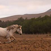 White Mare Gallops #1 - Panoramic Brighter Art Print